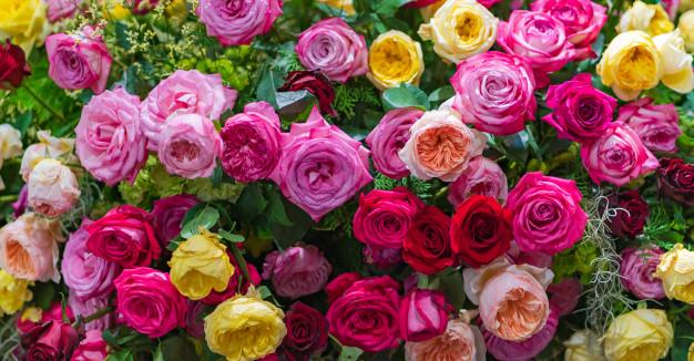 خواص شگفت انگیز گل رز طبیعی